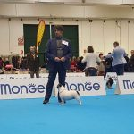 29067231_10210993944145996_7988852338376835072_n-150x150 World Dog Show 2017 - Leipzig 8-12 Novembre 2017 Bouledogue Francese Expo Francesco Zamperini News