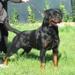 Varenne-DellAntico-Guerriero-150x150 ARKON Dell'Antico Guerriero Cani Cani - Soggetti Storici