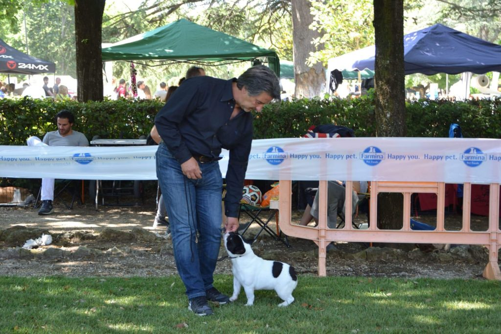 IMG-20180604-WA0005-1024x682 International Dog Show - Rieti 12 Maggio 2018 Bouledogue Francese Breaking News Expo Francesco Zamperini In Evidenza News