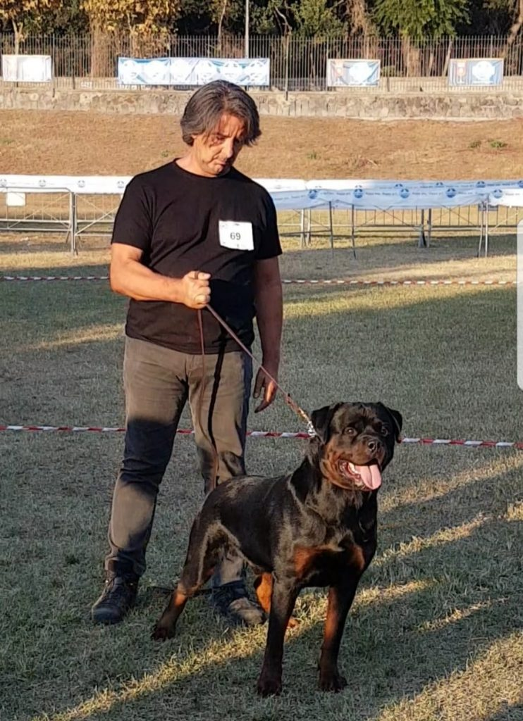 Francesco-Zamperini-e-Vin-Diesel-DellAntico-Guerriero-Campionato-Sociale-2018-742x1024 38 Campionato Sociale Rottweiler - Ercolano - 28,29 Settembre 2018 Breaking News Expo Francesco Zamperini In Evidenza Multimediali News Prove Lavoro Rottweiler