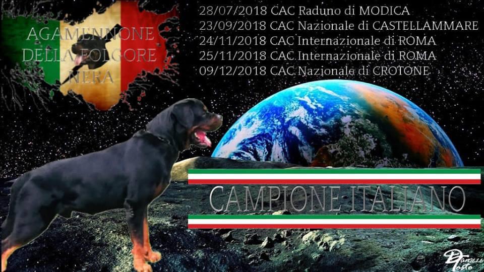 Agamennone-della-Folgore-Nera-Campione-Italiano-Risultati Nazionale di Crotone - Nuovo Rottweiler Campione Italiano Breaking News Expo Francesco Zamperini In Evidenza Multimediali News Prove Lavoro Rottweiler