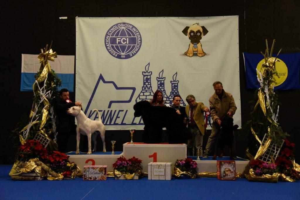 San-Marino-Dog-Show-Vin-Diesel-Dell-Antico-Guerriero-1024x682 Layout Cane 2019 Cucciolate Cucciolate - Cuccioli Disponibili Cucciolate - Rottweiler