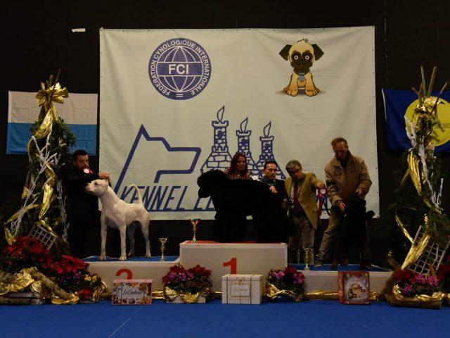 San-Marino-Dog-Show-Vin-Diesel-Dell-Antico-Guerriero-640x480 IL BLOG - Dell'Antico Guerriero