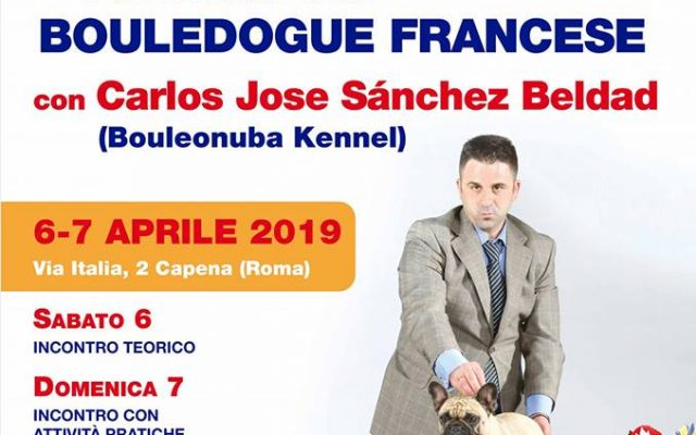 Parlando del Bouledogue Francese