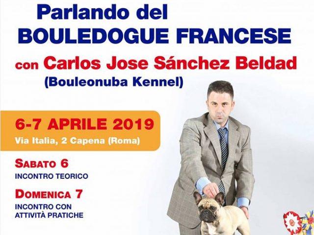 Parlando-del-Bouledogue-Francese-640x480 IL BLOG - Dell'Antico Guerriero