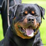 Rio-Del-Colle-Canino6-150x150 Nuova Cucciolata - B Allevamento Breaking News News