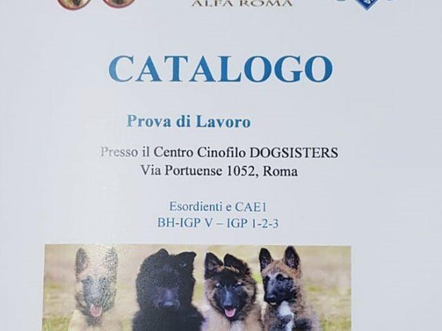 Copertina-Catalogo-BH-IGP-Roma-13-Aprile-2019-640x480 IL BLOG - Dell'Antico Guerriero