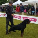 Yarno-DellAntico-Guerriero-IDS-Caserta-VESUVIO-WINNER-2019-02-150x150 International Dog Show - Rieti 12 Maggio 2018 Bouledogue Francese Breaking News Expo Francesco Zamperini In Evidenza News