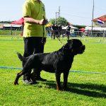 IMG-20190608-WA0000-150x150 European Dog Show 2019 Expo Francesco Zamperini In Evidenza News Più Lette Rottweiler Scelte da Zamperini Varie Yarno Dell'Antico Guerriero