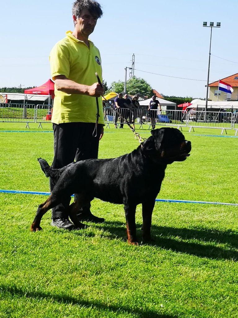 IMG-20190608-WA0000-768x1024 Layout Cane 2019 Cucciolate Cucciolate - Cuccioli Disponibili Cucciolate - Rottweiler