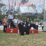 Yarno-DellAntico-Guerriero-Esposizione-internazionale-di-Terni-22-Giugno-2019-2BOG-150x150 International Dog Show e Roma Winner - 22 Ottobre 2017 Expo News Rottweiler