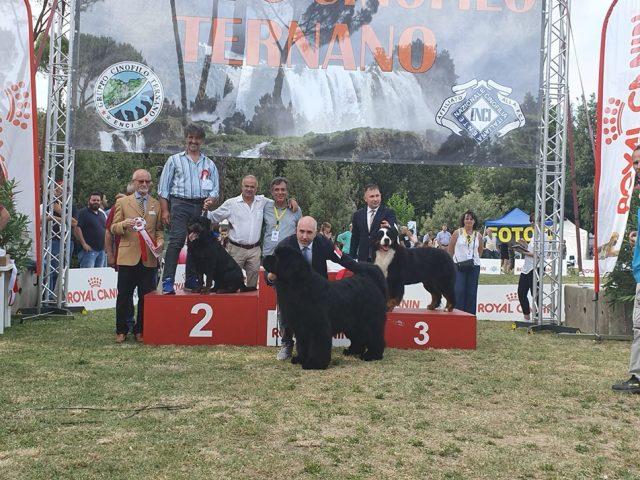Yarno-DellAntico-Guerriero-Esposizione-internazionale-di-Terni-22-Giugno-2019-2BOG-640x480 IL BLOG - Dell'Antico Guerriero