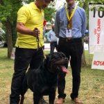 Yarno-DellAntico-Guerriero-Esposizione-internazionale-di-Terni-22-Giugno-2019-BOB-150x150 International Dog Show e Roma Winner - 22 Ottobre 2017 Expo News Rottweiler