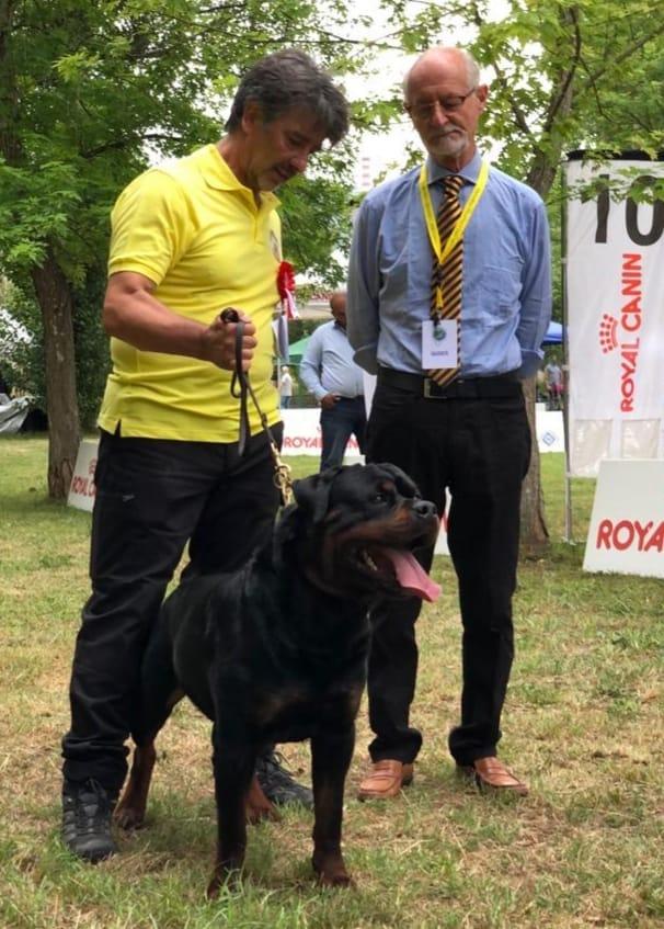 Yarno Dell'Antico Guerriero - Esposizione internazionale di Terni - 22 Giugno 2019 - BOB