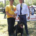 Yarno-DellAntico-Guerriero-Franceso-Zamperini-Francesco-Cocchetti-BOB-Internazionale-di-Orvieto-2019-150x150 International Dog Show e Roma Winner - 22 Ottobre 2017 Expo News Rottweiler