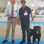 Yarno-DellAntico-Guerriero-Torino-6-Luglio-2019-Francesco-Zamperini-Ottavio-Perricone-150x150 International Dog Show e Roma Winner - 22 Ottobre 2017 Expo News Rottweiler