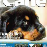 Magazine-MY-DOG-Juni-2020 - 150x150 SIR SOZIALMEISTERSCHAFT 2020 - YARNO Dell'Antico Guerriero Allevamento Francesco Zamperini News News - Zamperini Rottweiler shortcuts Zamperini