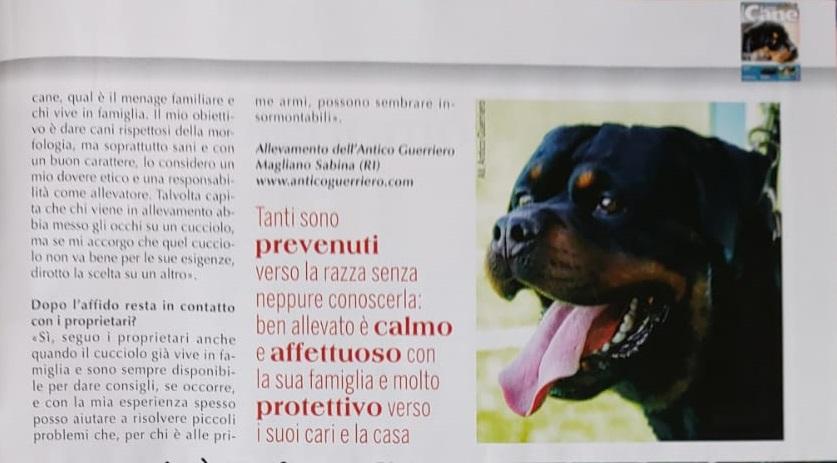 Rivista-IL-MIO-CANE-Giugno-2020-Intervista-a-Francesco-Zamperini-parte-2 Intervista sulla Rivista IL MIO CANE - Giugno 2020 Allevamento Francesco Zamperini News News - Zamperini Rottweiler Scelte da Zamperini