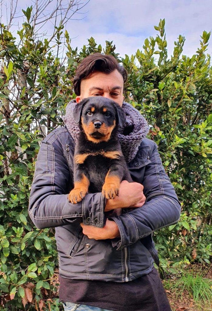 """RAYCHA-DellAntico-Guerriero-698x1024 Lettera """"R"""" - Tutti i Cuccioli con le nuove Famiglie Allevamento Francesco Zamperini News News - Zamperini Rottweiler Scelte da Zamperini"""