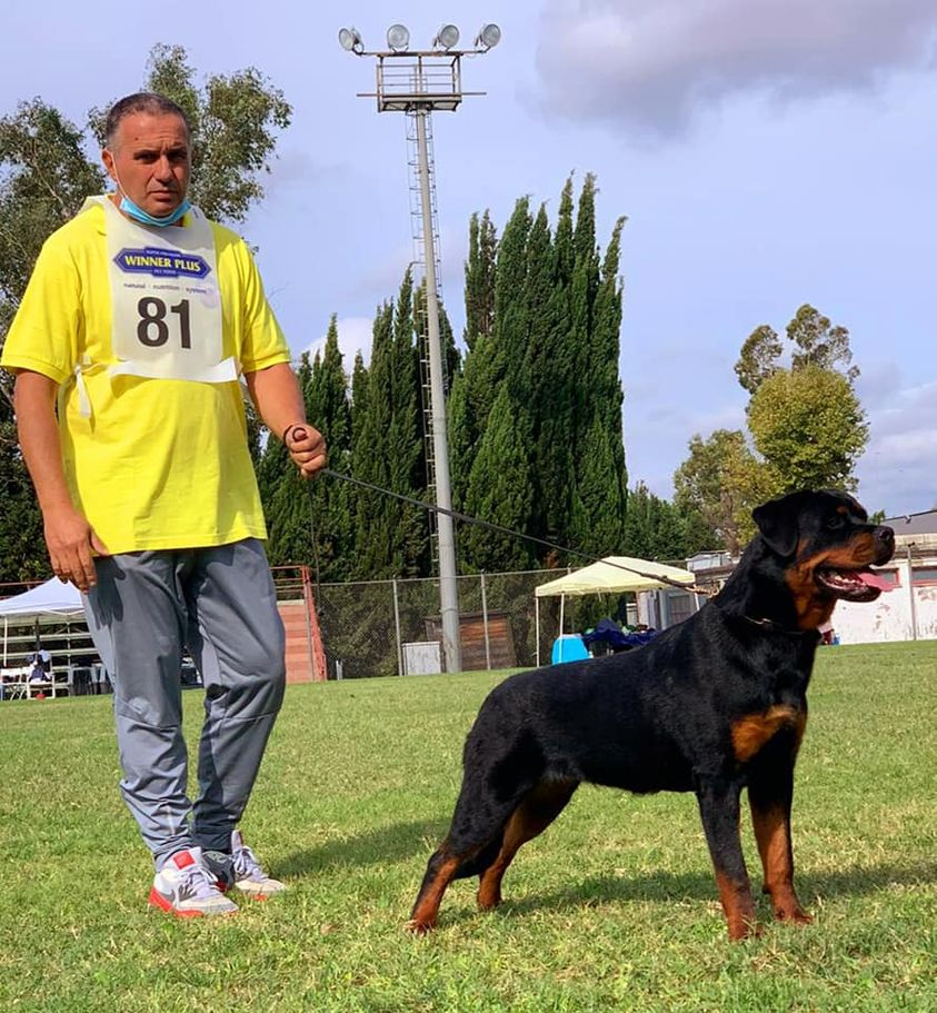 Nyla-Diesel-DellAntico-Guerriero-Campionato-Sociale-SIR-2020-01 Layout Cane 2019 Cucciolate Cucciolate - Cuccioli Disponibili Cucciolate - Rottweiler