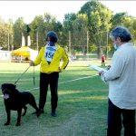 Yarno-DellAntico-Guerriero-Campionato-Sociale-SIR-2020-02-150x150 Giovane Femmina Allevamento News Vendita