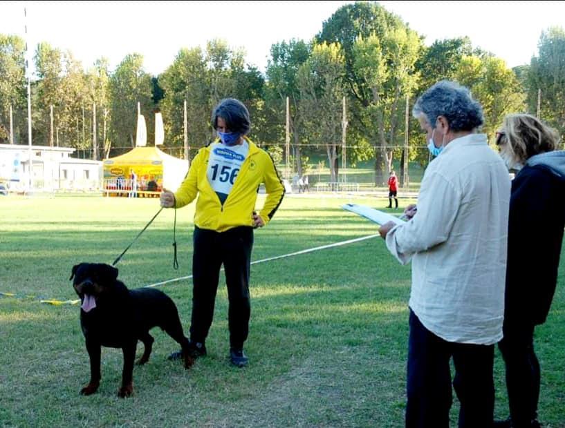 Yarno-DellAntico-Guerriero-Campionato-Sociale-SIR-2020-02 Layout Cane 2019 Cucciolate Cucciolate - Cuccioli Disponibili Cucciolate - Rottweiler